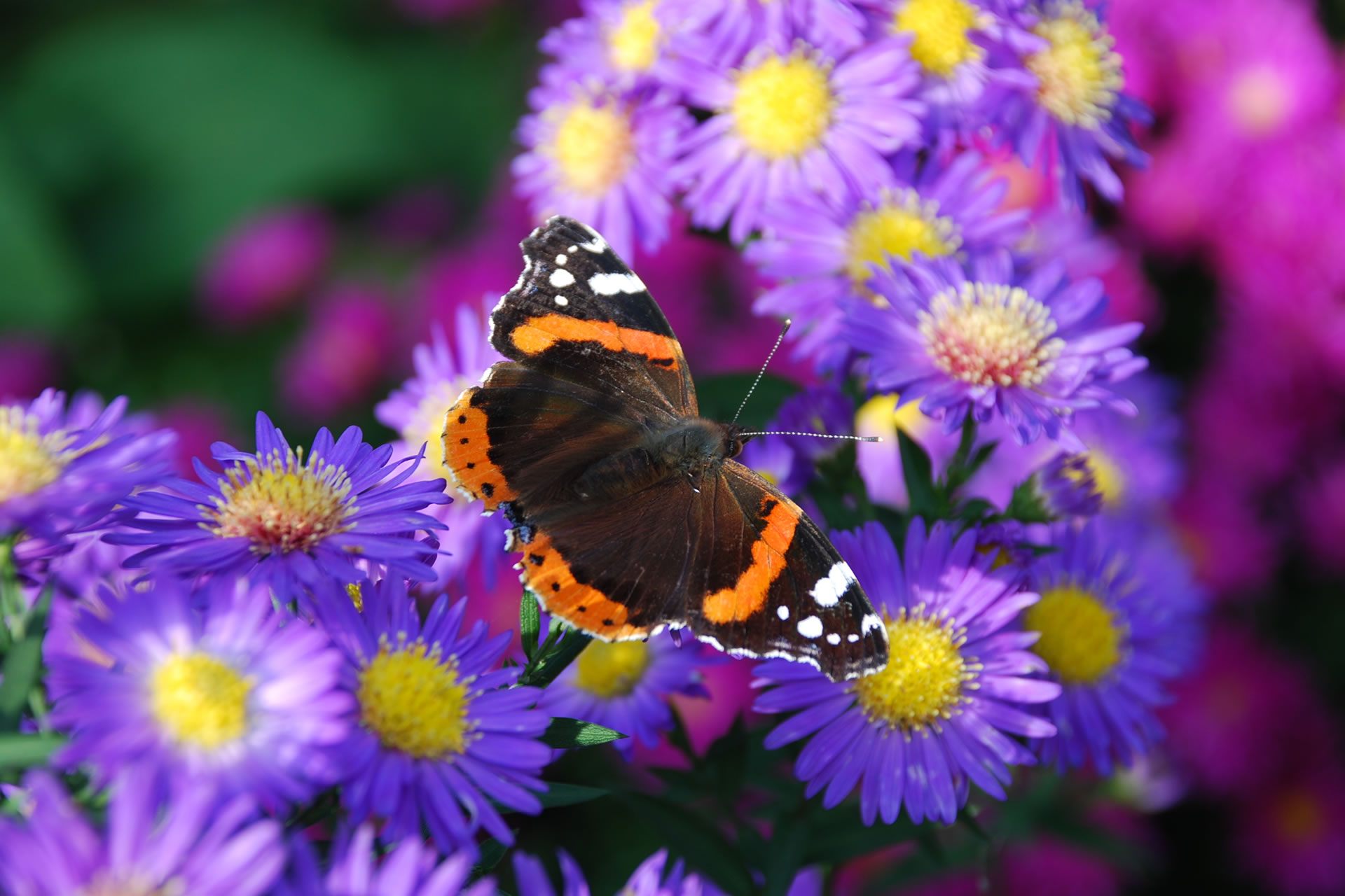 Largest Butterfly Park in Europe to open in 2011