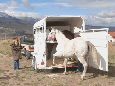 WANTED: Horse Trailer for Charity Walk