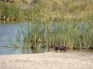 Doñana National Park - Huelva