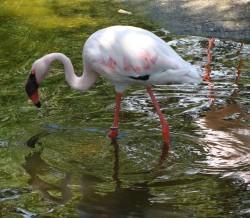 Selwo Aventura - Zoo in Estepona, Malaga