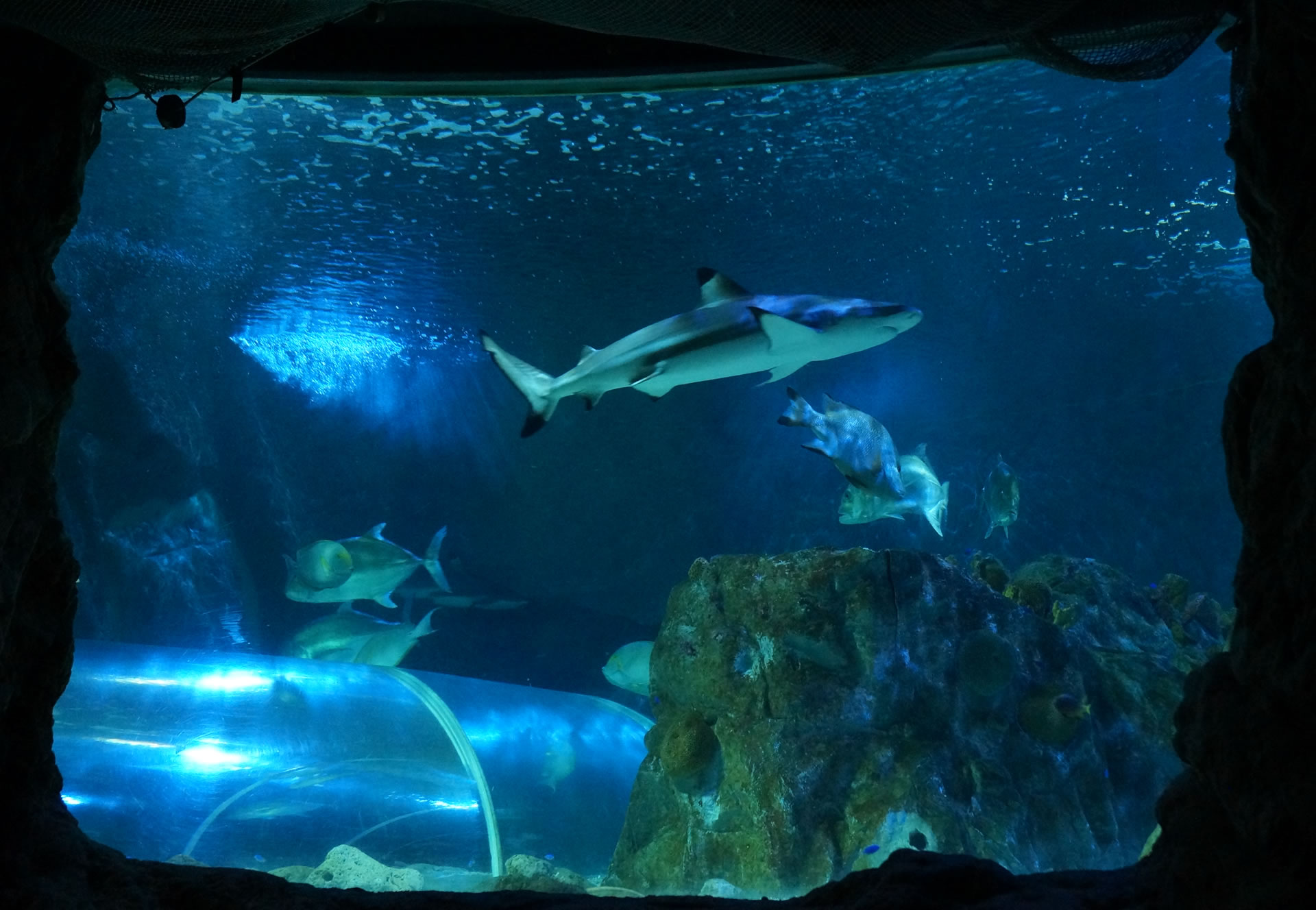 Sea Life – Benalmadena