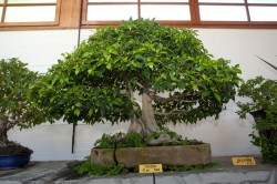 Museum of Bonsai of Marbella